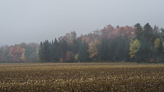 Orleans Island, Quebec, Canada (Tasmanian58) Tags: fog fall morning colors autumn orleans island quebec canada landscape mitan road canonfd 85mm vintage lens sony a7ii
