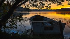 Klar til afgang 2 (Walter Johannesen) Tags: hald sø morgen natur nature morning skov træ tree træer trees wood