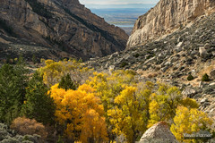 Cottonwood Canyon Colors (kevin-palmer) Tags: cottonwoodcanyon blm lovell wyoming october fall autumn nikond750 colorful leaves foliage gold golden yellow tamron2470mmf28 bighornriver bighornreservoir walls sunny bighornmountains boulders