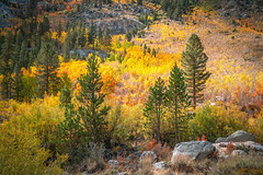 South Fork Bishop Creek Eastern Sierras Fall Foliage California Fall Colors Clouds! Elliot McGucken California Fine Art Landscape & Nature Photography! High Sierras Autumn Aspens Red Orange Yellow Green Leaves! 8K HIgh Res! John Muir's The Range of Light! (45SURF Hero's Odyssey Mythology Landscapes & Godde) Tags: south fork bishop creek clouds eastern sierras fall foliage california color elliot mcgucken fine art landscape nature photography high autumn aspens red orange yellow green leaves 8k res john muirs the range light sony a7r ii carl zeiss variotessar t fe 1635mm f4 za oss lens sel1635z