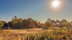 Goldener Sonnenschein (w.lichtmagie) Tags: vilsheim landshut niederbayern bayern deutschland sonne gegenlicht raw dynamik herbst landschaft golden schilf canonefs1755 ngc