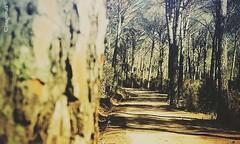Monte olia.  #sardegna #sardinia #fotosardegna #foto #fotografo #photo #photographic #photographers #travel #traveler #vacanze #summer2018 #sea #landscape #sunset #imagomax #love #awesome (fotomotosport1) Tags: landscape sardinia fotosardegna summer2018 sea awesome fotografo photo imagomax photographers love foto sardegna photographic vacanze sunset traveler travel