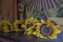 Urbex Villa Mistral (Fenjav) Tags: urbex abandoned decay villa mistral halloween horror skeleton pumpkins piano sunflowers painting