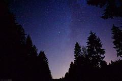 Stars and trees (elpupy) Tags: black forbach forest landscape milchstrase milky night schwarzenbach schwarzwald sky star stars sterne trees wald way tree