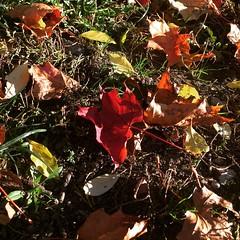 Jesienne liście (basiamarcisz) Tags: podlaskie leaves liście autumn jesień