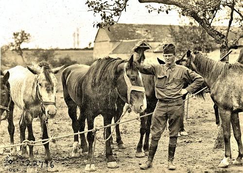 Group of gassed horses Vet. hospital, Sergy France 8-27-18 NARA111-SC-022776-ac