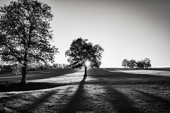 evening shadows (bernd obervossbeck) Tags: baum tree silhouette baumsilhouette treesilhouette light licht shadow schatten wiese meadow abendlicht abend eveninglight evening sonne sun gegenlicht backlight sauerland landscape landschaft landscapephotography landschaftsfotografie natur blackandwhite bw schwarzweis schwarzweiss fujixt1 xf1024mmf4rois berndobervossbeck