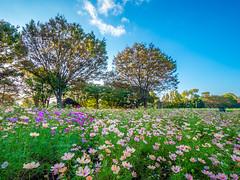 Flower garden (dayonkaede) Tags: olympus em1markii leicadg818f2840