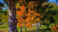 Fall Trees (Tim @ Photovisions) Tags: trees park grass fall autumn colors tree nebraska gagecounty fuji fujifilm xt2