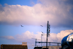 seagulls 1 (athanecon) Tags: urban gulls seagulls city alimos greece antennas roofs clouds flying