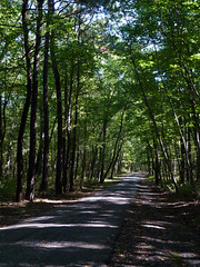 Museum Road (Dendroica cerulea) Tags: road trees forest shadow autumn cheesequakestatepark matawan middlesexcounty nj newjersey
