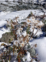 Fleur eneigé (-Skifan-) Tags: fleur neige promeadeverslactãªteronde valthorens skifan 3vallées les3vallées promeadeverslactêteronde