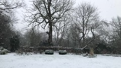 Slow Slow Snow (The Stig 2009 (On Holiday)) Tags: slow motion snow london movie thestig2009 thestig stig 2009 2018 tony o tonyo iphone 8 plus weather winter pretty gentle soft hampstead heath trees