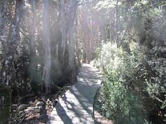 IMG_3786 (shearwater41) Tags: australia tasmania cradlemountain dovelake boardwalk