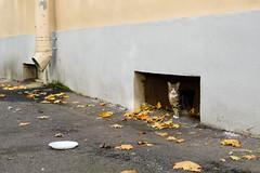 cat291, citizen of Saint Petersburg (cat_collector) Tags: russia saintpetersburg autumn sonyilce6000 sonyepz1650mmf3556oss cats 2018