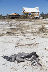 Hurricane Michael (Rigsby'sUniquePhotography) Tags: hurricane michael florida naturaldisaster nature weather stormchasing stormchaser journalism photojournalist aaronrigsby canon teamcanon sandisk historic