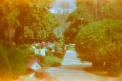 (aismist) Tags: pentaxsv supertakumar55mm expiredfilm fitzroygardens melbourne kodakgold400 cokin 084