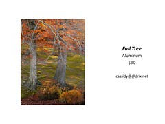 "Fall Tree • <a style=""font-size:0.8em;"" href=""https://www.flickr.com/photos/124378531@N04/30423648507/"" target=""_blank"">View on Flickr</a>"