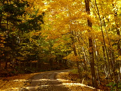 Road to the top of Mt. Marquette--Explored (yooperann) Tags: maple trees fall autumn bright yellow orange sunshine woods forest road marquette upper peninsula michigan dirt