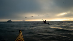 Pelicans! (Lisa Ouellette) Tags: sfbay pelicans alcatraz fog swimescort bridgetobridge morning kayak california unitedstates us