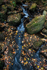 Pentre Du (Rob Pitt) Tags: autumn uk mini waterfall leaves rocks water betwsycoed north wales forest moss sony a7rii long exposure rock tree