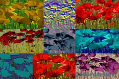 9 ROSELLES, 9 POPPIES (Cal Centelles) Tags: creacion amapolas roselles poppy cuadro color flores
