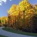 Autumn Road - Spring Grove Cemetery & Arboretum