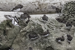 birds-7187 (pmbell64) Tags: capitalg britishcolumbia canada ca