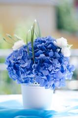 beautiful flowers (theilheimer) Tags: blumen blau tisch pflanzen weiss licht gegenlicht ambiente deko festlichkeit taufe feierlichkeit feierlichkeiten topf dekoration schön bokeh festbrennweite 50mm blume stilleben stillife