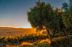 Carneros Hills (Thanks for 1.4 million views) Tags: winery ram gate california wine
