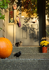 You've Got Mail - That's Handy (Katrina Wright) Tags: dsc2113r cat milo halloween pumpkin crow skeleton scary orange yellow window hww door steps