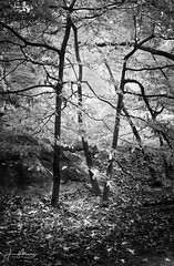 Three Trees (Wits End Photography) Tags: view natural landscape plants nature blackwhite rural picturesque rocks trees grey country black monochrome color forest scenic white blackandwhite geological bw woods places gray outdoor outside plant tree