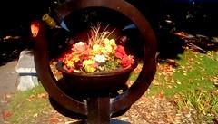 Library Autumn flowers! (Maenette1) Tags: autumn flowers planter garden spiespubliclibrary menominee uppermichigan flicker365 allthingsmichigan absolutemichigan projectmichigan michiganlibraries