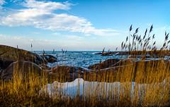 October blues (Joni Mansikka) Tags: autumn nature outdoor sea shore sky coast rocky reeds clouds horizonblues seascape balticsea kallo pori suomi finland atx280afpro tokinaaf2880mmf28