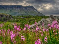 Hardangervidda no. 1 (Dan Österberg) Tags: hardangervidda norway norge landscape mountains clouds hdr flowers field trees highland