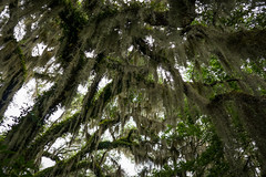 Southern Jungle (dayman1776) Tags: sony a6000 beautiful brookgreen gardens south carolina trees southern moss hanging tree wallpaper nature natural