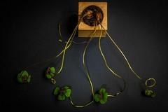 four leaf clover - good luck (Angelo Petrozza) Tags: four leaf clover good luck plant quadrifoglio portafortuna angelopetrozza hd35mmmacrolimited stilllife