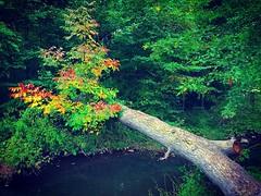 Rainbow Bridge (Christian Montone) Tags: september fall autumn nj newjersey instagram montone christianmontone