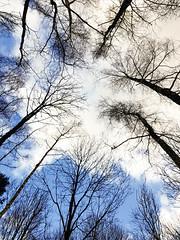 20180211_151513 (Geert Van Keymolen) Tags: 2018 belgien belgique belgium belgië erpemere europe s8 samsung arbre baum bois boom bos buitenshuis ciel clouds color couleur draussen exterieur farbe forest galaxys8 himmel kleur lucht natur nature natuur nuages outdoor planten plants sky tree wald wolken vlaanderen be