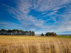 PA020434 (banagher_links) Tags: olympus omd em10 mark iii mft micro 43 russia landscape autumn