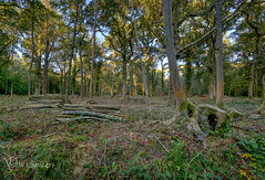 They took all the trees and put em in a tree museum. (Through Bri`s Lens) Tags: hdr sussex forest woods logs biglog autumn brianspicer canon5dmk3 canon1635f4 polariser