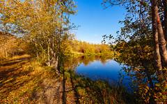 It's Happening (John Westrock) Tags: autumn fall autumncolors fallcolors pond path trees nature light bluesky washingtonstate pacificnorthwest canoneos5dmarkiii canonef1635mmf4lis easton