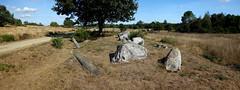 L'alignement de menhirs de Forgerais à Saint-Just - Ille-et-Vilaine - Septembre 2018 - 05 (Erwan Corre) Tags: mégalithe menhir illeetvilaine bretagne france quartzite quartz saintjust stjust cojoux landesdecojoux forgerais alignement