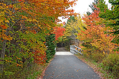 DSC03203 - Trans Canada Trail (archer10 (Dennis) 196M Views) Tags: timberlea sony a6300 ilce6300 18200mm 1650mm mirrorless free freepicture archer10 dennis jarvis dennisgjarvis dennisjarvis iamcanadian novascotia canada transcanadatrail autumn fall colours trees