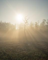 Bosch (23 of 32) (VarsAbove) Tags: kampinos kpn kampinoski park narodowy fog mist mgła morning sunrise dawn wschód polska poland łoś moose sony sonya7 a7ii coffe milkyway