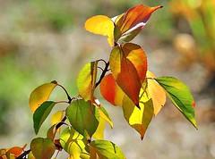 Les merveilles de l'automne -2- (mamietherese1) Tags: ngc npc world100f earthmarvels50earthfaves fabuleuse excellencedumois