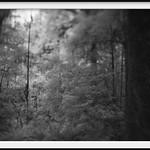 deep forest 24 thumbnail