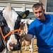Cattle Fair in Edam