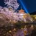 Kiyomizudera Sakura Night Illumination - Kyoto, Japan