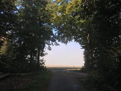 IMG_2974 (eduard43) Tags: natur nature rafz sonne sun waldwege wald forest forestpaths schweiz 2018 iphone